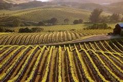 wine_country_jpg